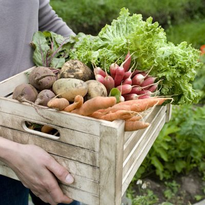 Key to weight Loss: Quality NOT Quantity